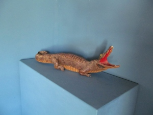 EE031 Taxidermy Crocodile