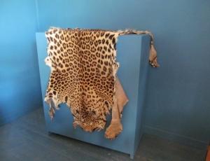 EE032 Leopard Skin